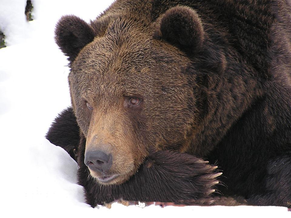 Raunachtzeit – Winterschlaf, Schutz und Stärkung